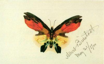 Albert Bierstadt Butterfly