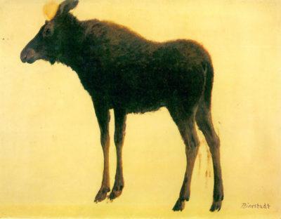 Albert Bierstadt Elk