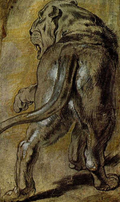 Peter Paul Rubens Lion