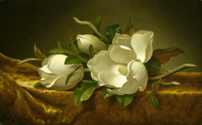 Martin Johnson Heade Magnolias on gold velvet cloth