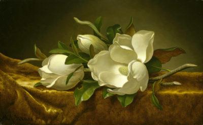 Martin Johnson Heade Magnolias on gold velvet cloth