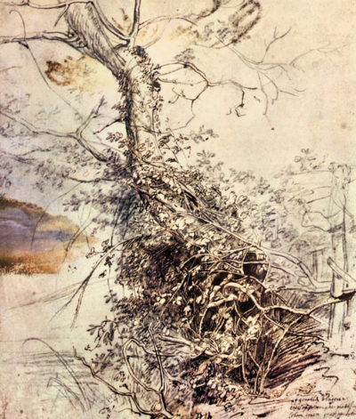Peter Paul Rubens Study of Tree