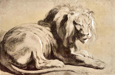 Peter Paul Rubens Study of a Lion