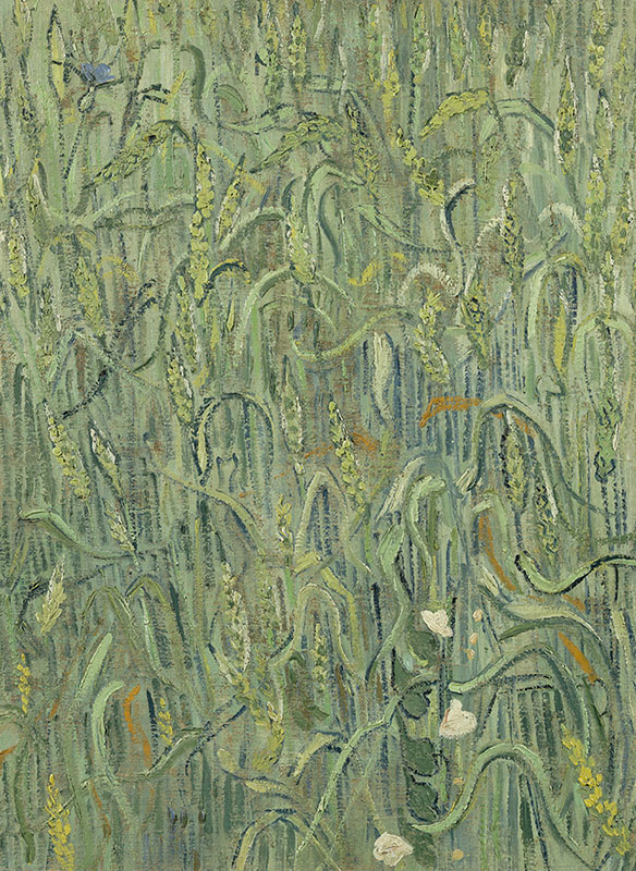 Vincent van Gogh Ears of Wheat