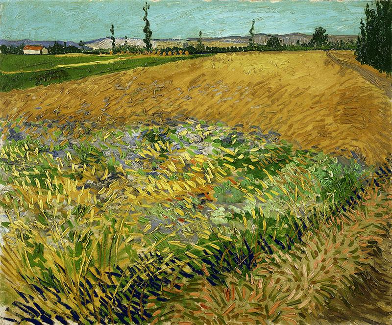 Vincent van Gogh Wheatfield
