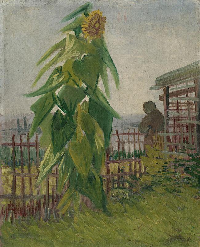 Vincent van Gogh Allotment with Sunflower
