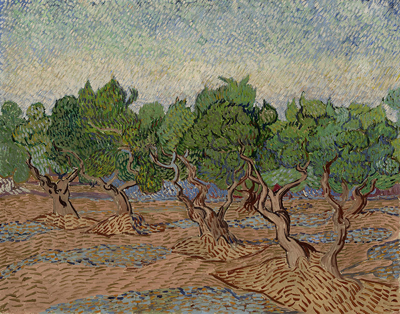 Vincent van Gogh Olive Grove (2)