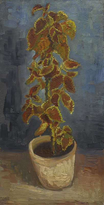 Vincent van Gogh Flame Nettle in a Flowerpot