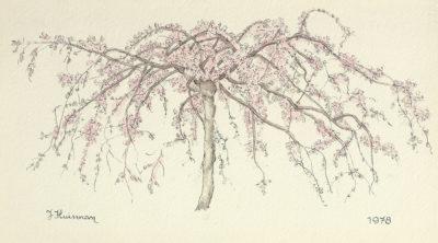 Jopie Huisman Bloeiend boompje 1978