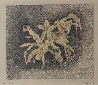 Efkes Thûs Stervende Cactus 1974