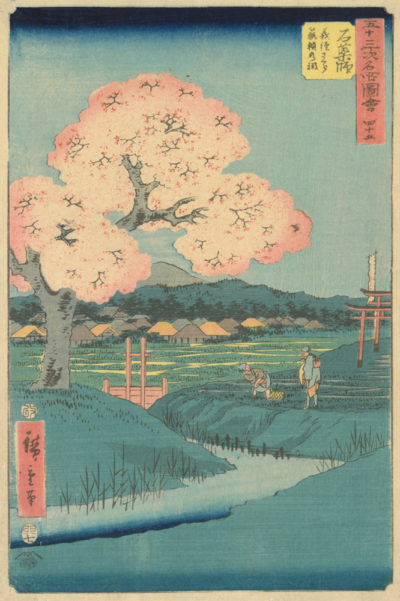 Utagawa Hiroshige Ishiyakushi: The Yoshitsune Cherry Tree near the Noriyori Shrine